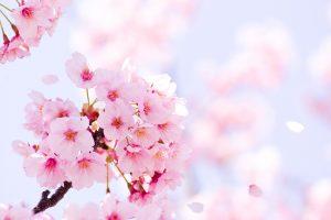 お祝い状やお礼文に使える4月の季語・時候の挨拶を知ろう