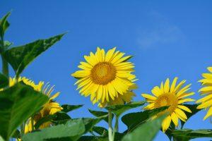 お祝い状やお礼文に使える8月の季語・時候の挨拶を知ろう