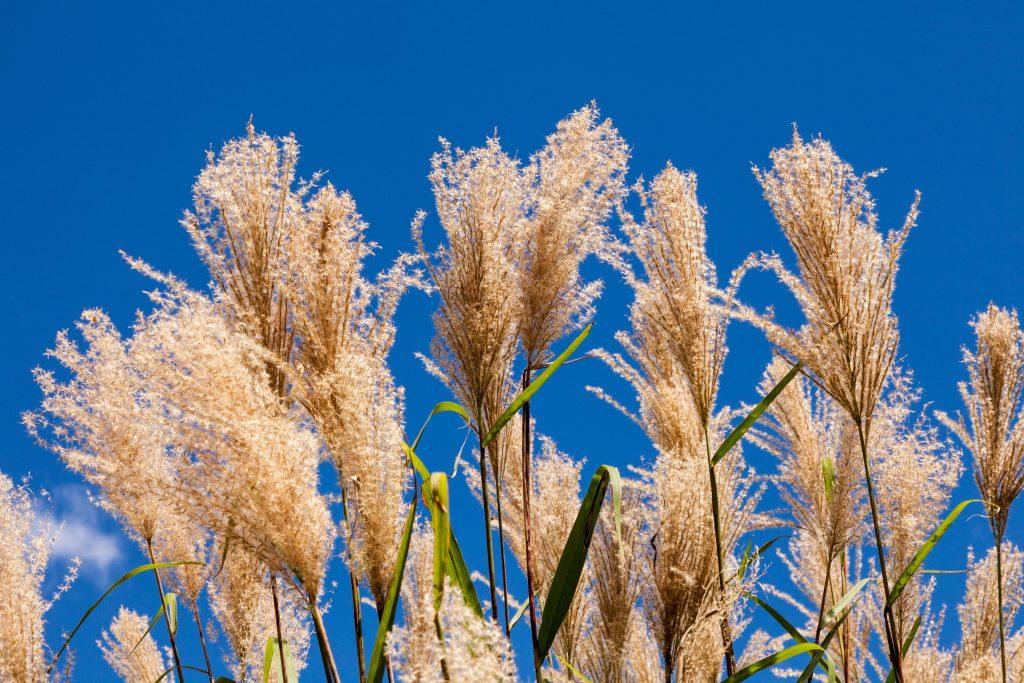 お祝い状やお礼文に使える9月の季語・時候の挨拶を知ろう