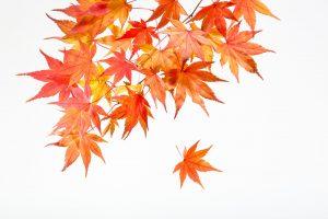 お祝い状やお礼文に使える11月の季語・時候の挨拶を知ろう