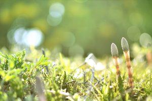 「春分の日」とはどのような日?