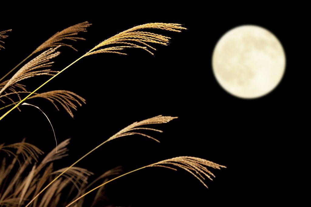 十五夜だけではない? 「十三夜」で秋を楽しむ