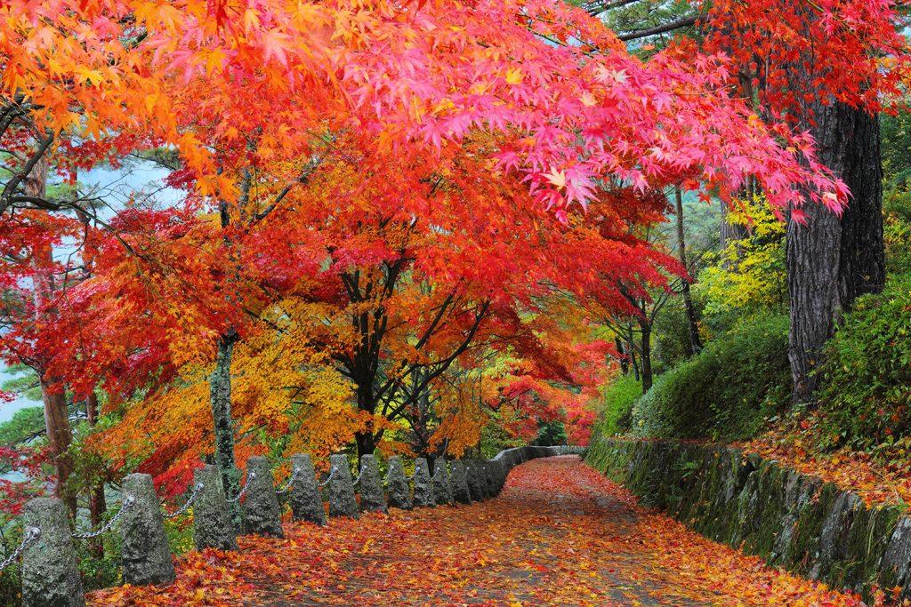 紅葉狩りを風流に楽しむおすすめスポット