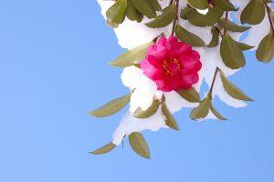 季節の挨拶状である寒中見舞いについて